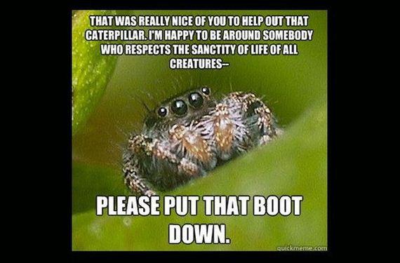 misunderstood_spider_meme