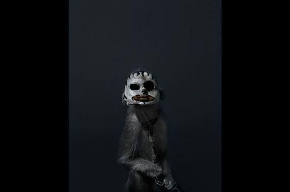 monkeys_in_jakarta