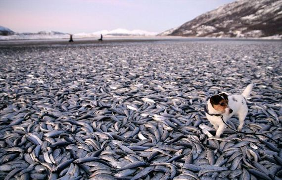 norway_frozen_fish
