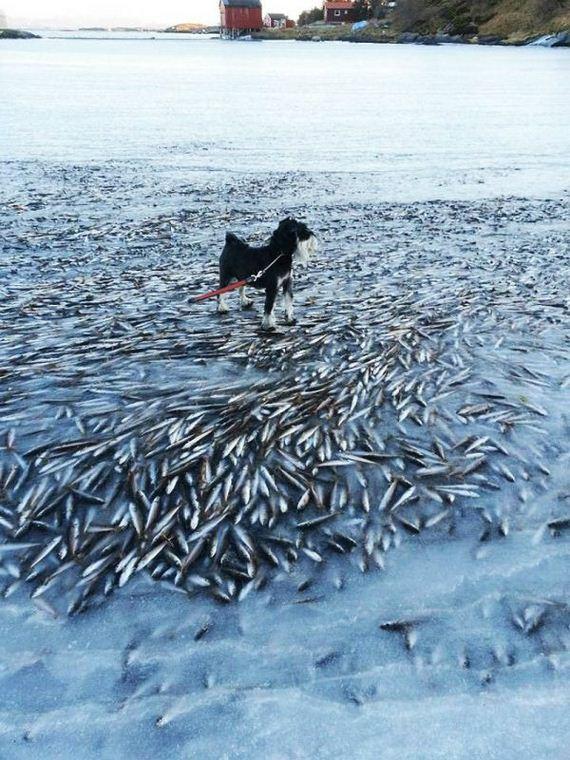 norway_frozen_fish