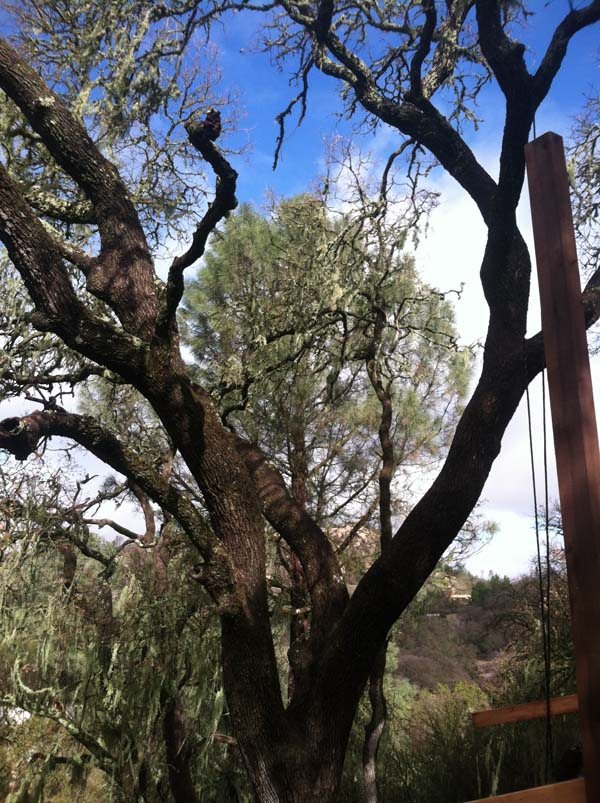 ordinary-tree