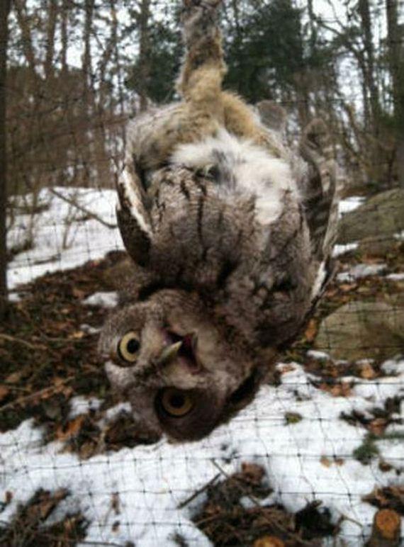 owl_rescue