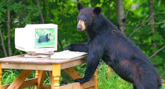 playing_bears