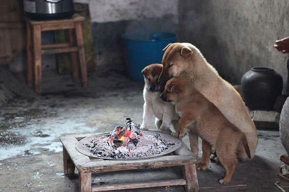 puppies_around_fire