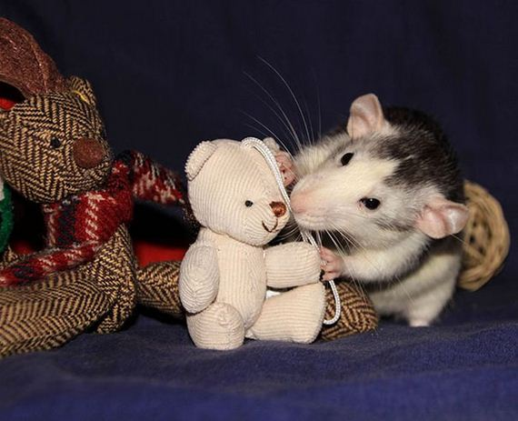 rats_teddy_bears_09