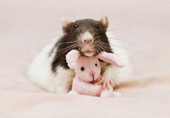 rats_teddy_bears_09