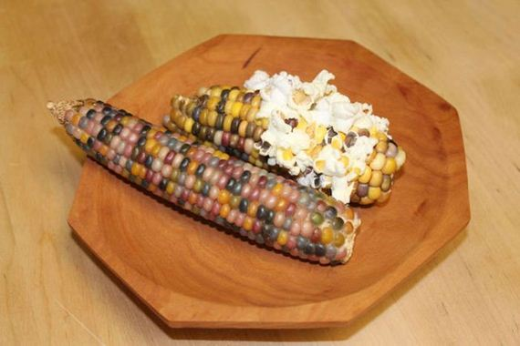 real_corn_on_the_cob_that_comes_in_colors