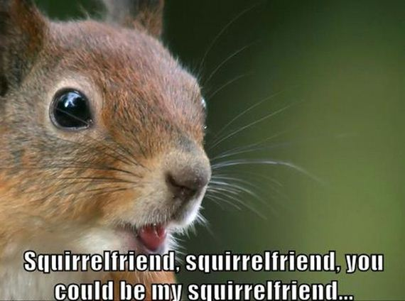 replace_it_with_squirrel