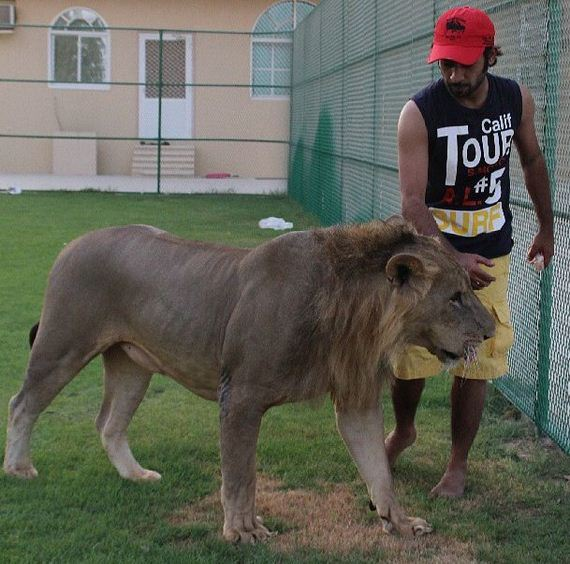 rich_guy_rith_lions_instagram
