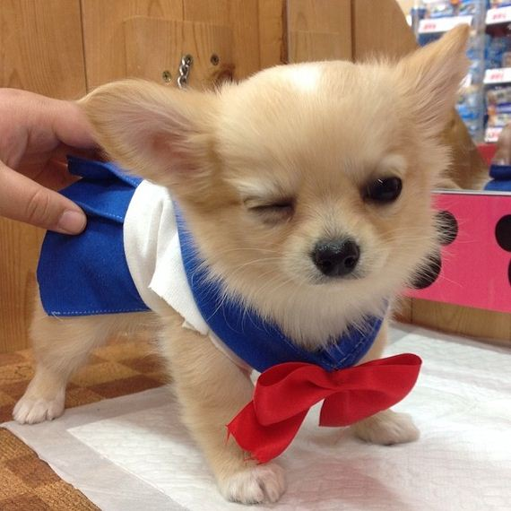 sailor-moon-dogs