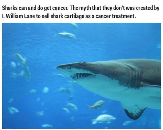 science_misconceptions_and_myths