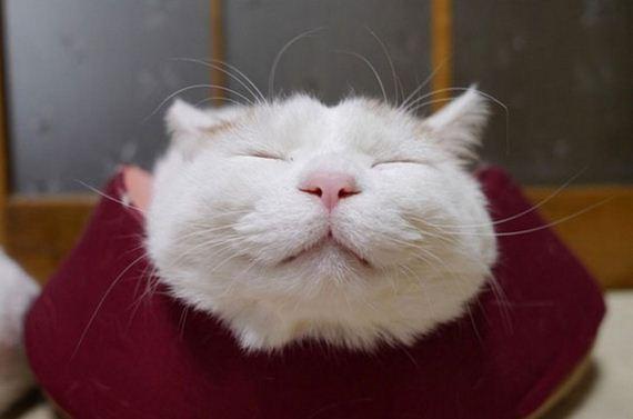 shironeko-το-πιο ευτυχισμένες