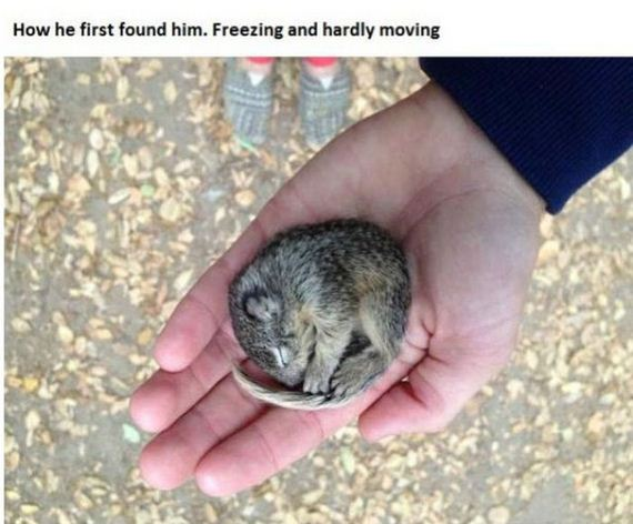 story_of_tiniest_rescued