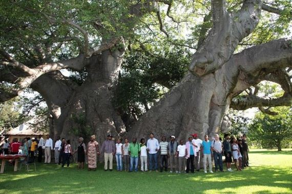 sunland_big_baobab_tree_bar