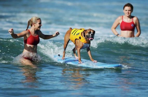 surfs_up_dog