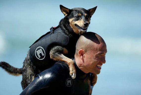 surfs_up_dog