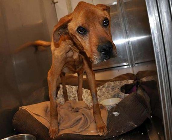 the_miracle_of_the_rescued_skinny_dog