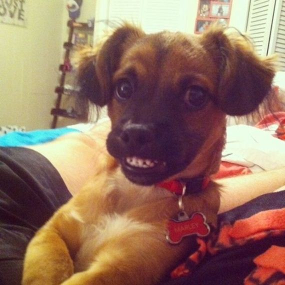 the_most_awkward_dogs_of_2013