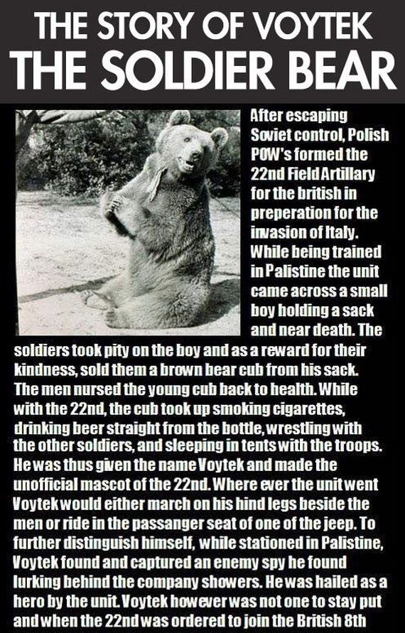 the_story_of_the_soldier_bear