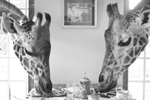 this-is-giraffe-manor