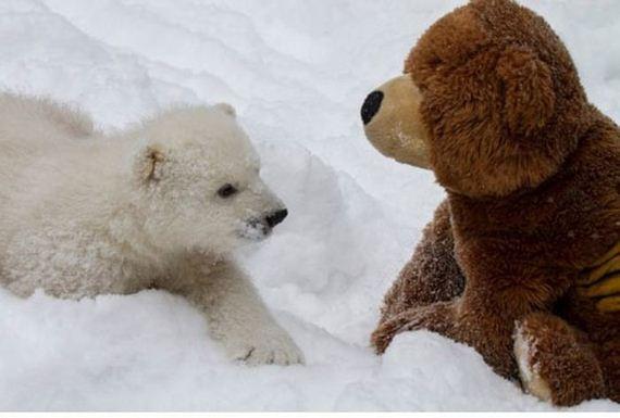 two_teddy_bears