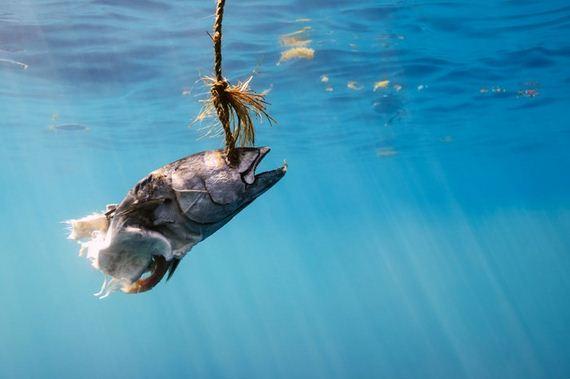 underwater_24