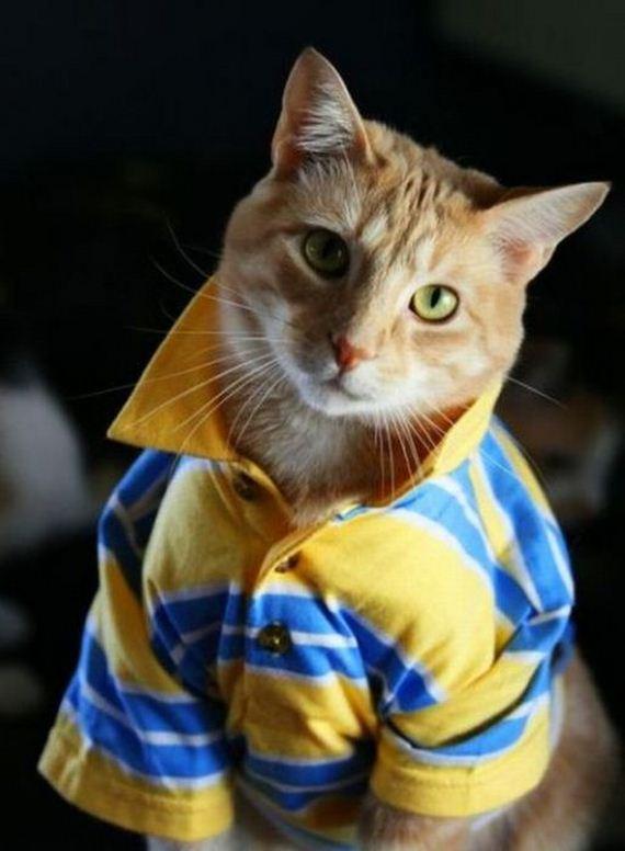 well_dressed_animals