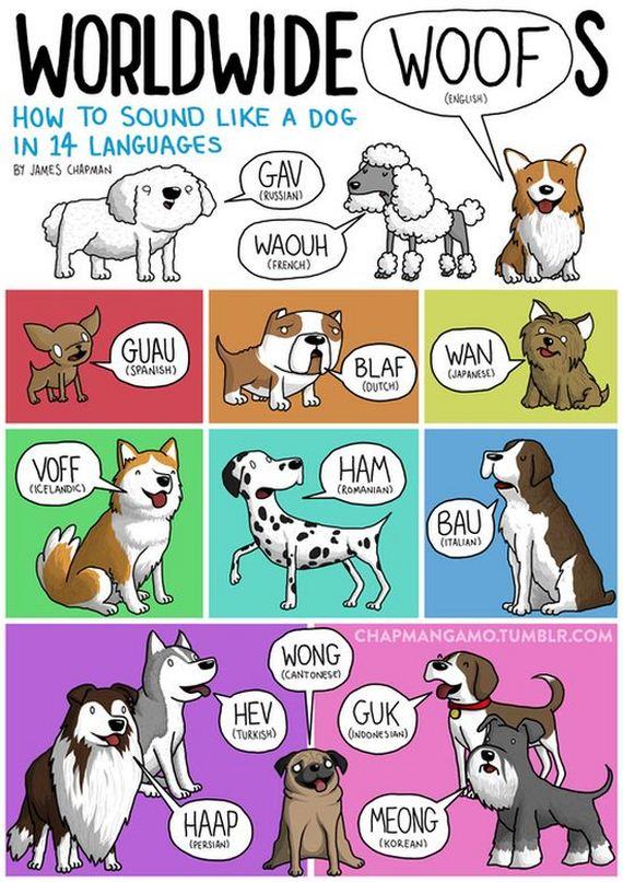 what_noises_do_animals_make_in_other_languages