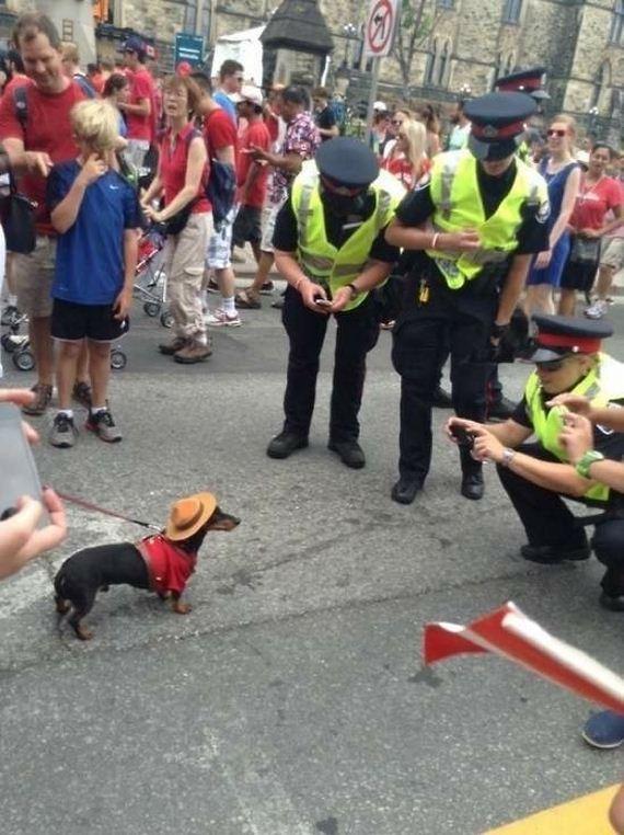 Cops-Caught