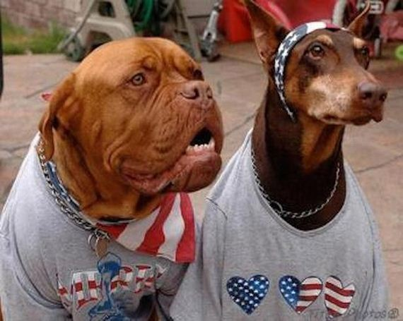 Dogs-That-Are-Ready