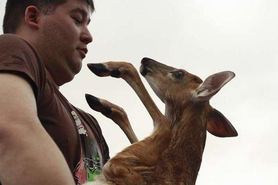 amazing_deer_rescue