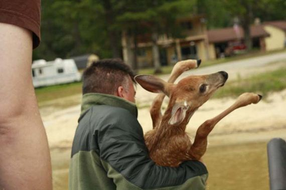 amazing_deer_rescue