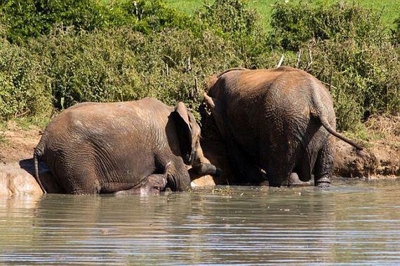 baby_elephant_rescue
