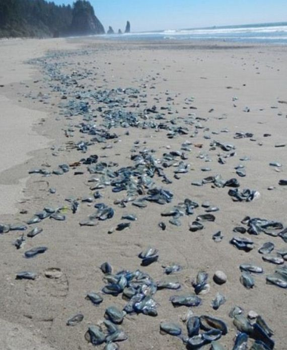 californian_beaches