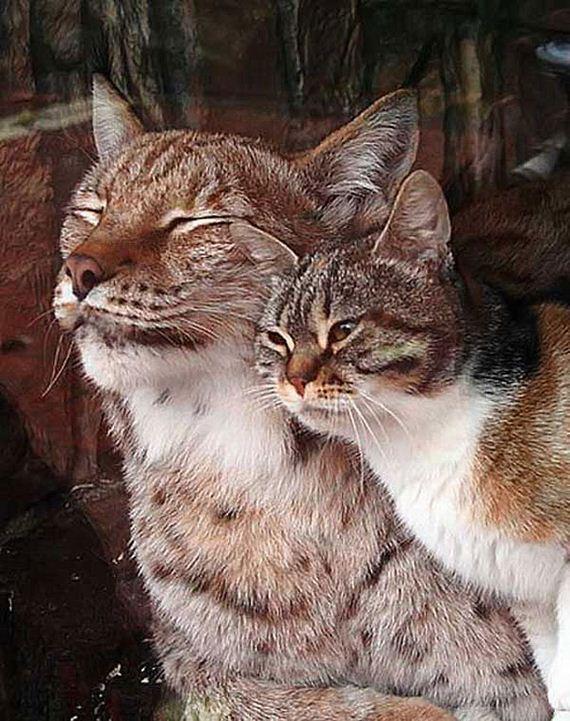 cat-lynx-bff