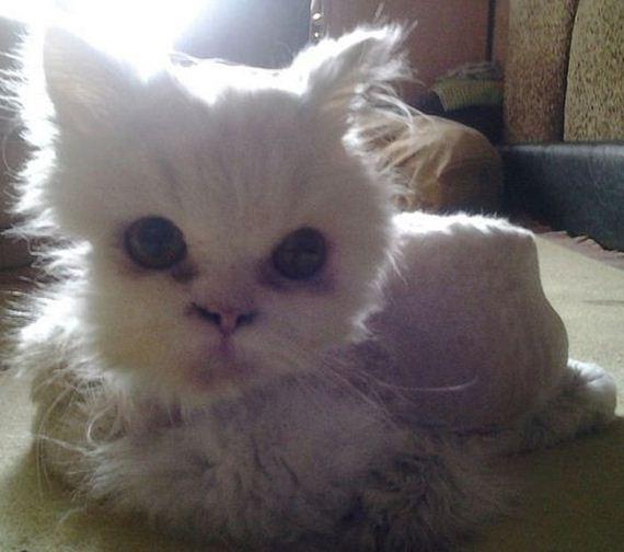 cat_rescue