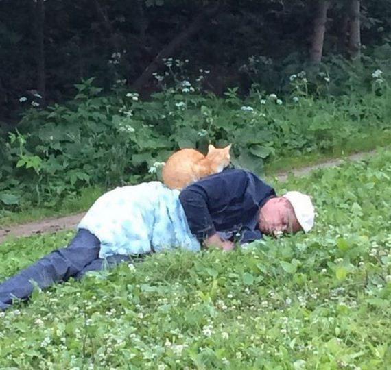 cats_find_comfortable