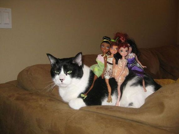 cats_give_no_damn