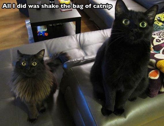 dangerous_catnip