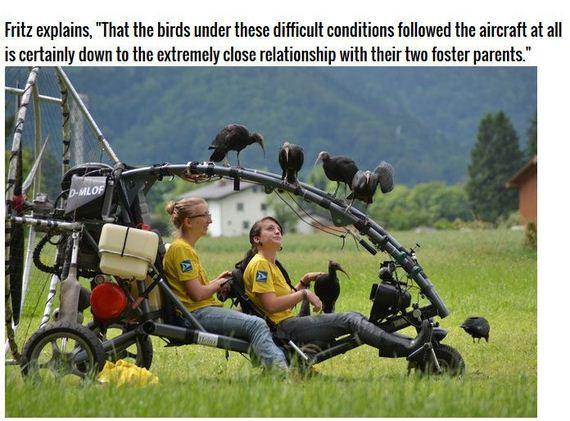 extinct_birds