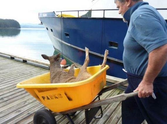 family_finds_deer
