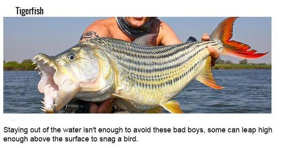 fish_with_unusual_skills