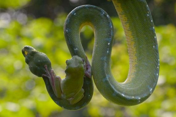 frog_snake