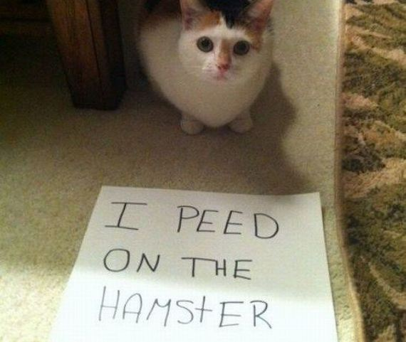funny-pictures-795