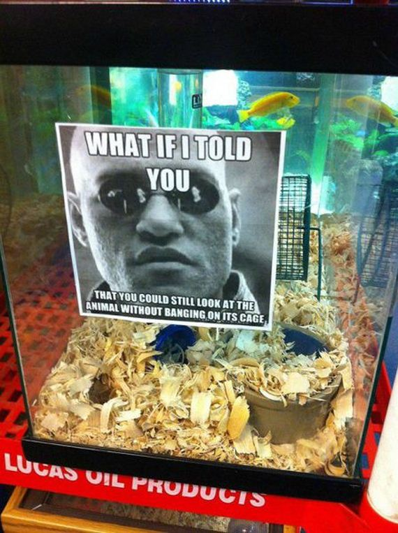 funny-pictures-816