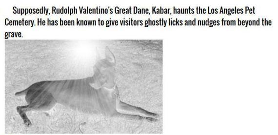 ghost_animals