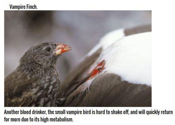 killer_birds