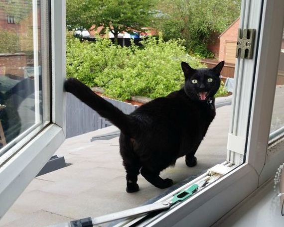 Perfect Cat Reactions To Going Outside For The First Time