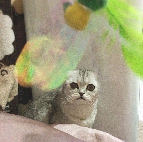 saddest_cat