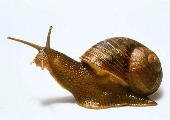 snail_eggs